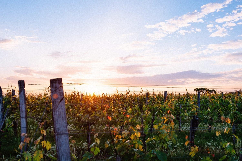 Bauer Wein Prosciutto Weingarten